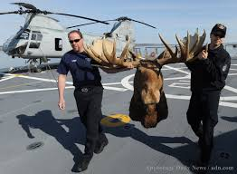 guess where this alaskan moose head is going