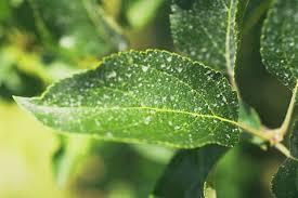 plant disease management
