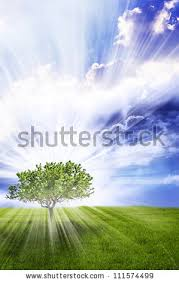 Divine Light Divine Light Stock Images Royalty Free Images U0026 Vectors