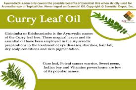 Curry Leaf Plant Diseases - chemical constituents of curry leaf oil ayurvedic oils