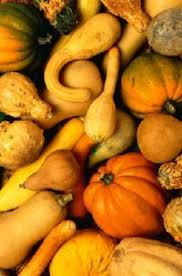 ornamental gourds a profile of an annual vine howstuffworks