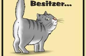 s e katzen spr che witzige lustige sprueche blechschild schild hunde katzen haustiere
