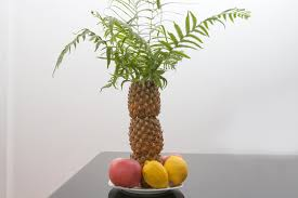 how to make a palm tree decoration by using pineapples synonym