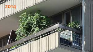 my balcony vegetable garden