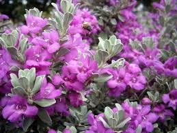 87 best stuff that grows in san antonio images on pinterest