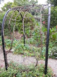 fruit trees and vines creativenaturalgardens com au