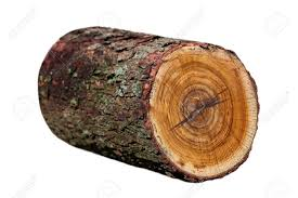 redbud wood log isolated on white stock photo picture and royalty