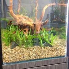 Aquascape Freshwater Aquarium Aquascapes 28 Photos U0026 15 Reviews Home Decor 1150 N Nimitz