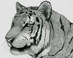 tiger face by therealarien on deviantart