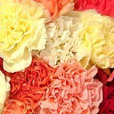 bulk carnations send fresh cut bulk flowers 400 assorted carnations