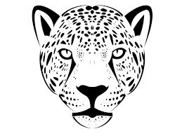 drawn jaguar face pencil and in color drawn jaguar face