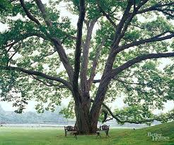 Best Trees For Backyard by Best 10 Best Shade Trees Ideas On Pinterest Corner Flower Bed