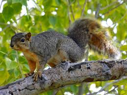 squirrels are so organized it u0027s nuts popular science