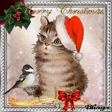 120 best christmas cats images on pinterest christmas cats