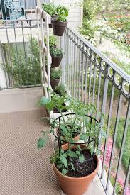 my balcony garden u0026 make squirrel repellant spray