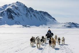 east greenland dog sled tour by pirhuk greenland expedition