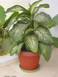the best indoor plants amusing 80 identify common tropical house plants decorating
