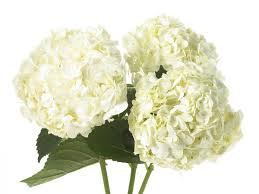 wedding flowers types kinds of flowers for weddings 20 types of wedding flowers