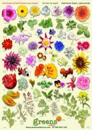 flower identifier by picture 28 flower identifier our plot at