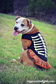 Martha Stewart Dog Halloween Costumes Fall Fashion Dogs Pawsitively Pets