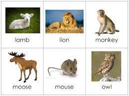 vocabulary cards animals your child should forever free
