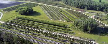 tennessee wholesale nursery wholesale wetland mitigation grasses