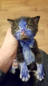 animal abusers colour in two kittens with sharpie permanent marker
