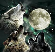 3 Wolf Moon Meme - three wolf moon an reviewer meme the flutterby case