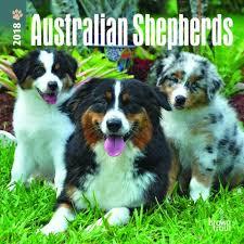 australian shepherd 2016 calendar australian shepherd a dog u0027s love