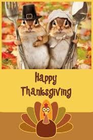 29 best animals images on happy thanksgiving