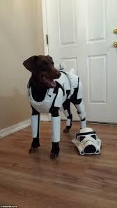 star wars fan creates the world u0027s best dog costume real fix