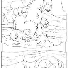 coloring page arctic animals archives mente beta most complete
