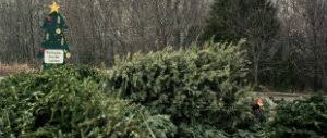 recycle christmas trees at three city of st louis parks