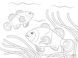 clown fish coloring page eson me