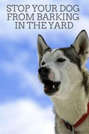 best 25 stop dog barking ideas on pinterest dog barking at