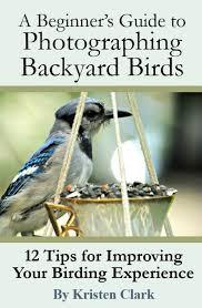 Birds In Your Backyard Produce Stunning Photographs Of The Birds In Your Backyard