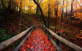 autumn pictures d i y halloween