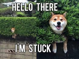Funny Meme Jokes - dog stuck in a hedge meme funny dirty adult jokes memes