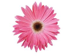 a flower you shouldn t reasons why you shouldn t rely on tesco flower delivery anymore
