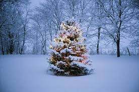 christmas tree with snow christmas tree in the snow pictures photos and images for