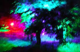 luminous garden