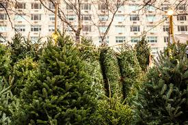 where to buy a real tree in nyc