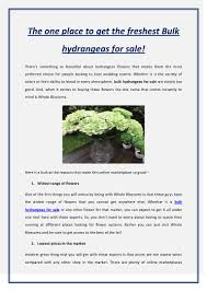 Bulk Hydrangeas Search Hydrangeas Plurk