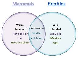 learning ideas grades k 8 mammals and reptiles venn diagram