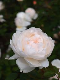 Most Beautiful English Castles Top 10 Most Beautiful White Roses Castles English And Rose