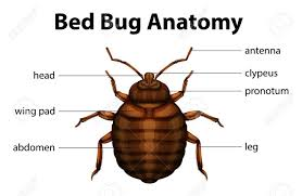 anatomy of a bug image collections learn human anatomy image