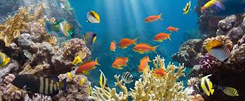 ornamental fish southeast agnet