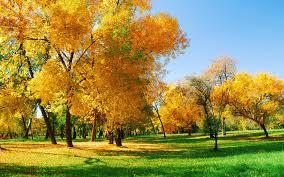 autumn park hd desktop wallpaper monitor colourful