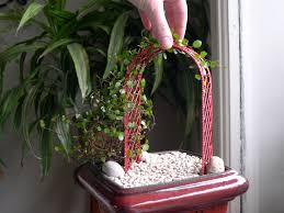 Indoor Vine Plant Indoor Plants The Mini Garden Guru From Twogreenthumbs Com Page 3