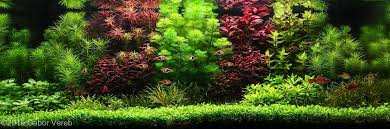 Aquascape Design How To Create Your First Aquascape U2022 Aquascaping Love
